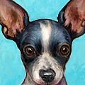 Chihuahua Puppy With Big Ears by Dottie Dracos
