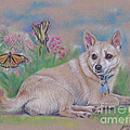 Chihuahua With Butterflies  by Gail Dolphin