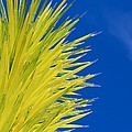 Chihuly Glass Tree by Eric Tressler