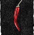 Chilli Pepper, Woodcut by Gary Hincks
