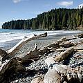 China Driftwood China Beach Juan De Fuca Provincial Park Bc by Andy Smy