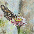 Chinese Butterfly by Trish Tritz
