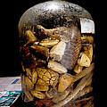 Chinese Snake Wine by Dant� Fenolio