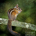 Chipmunk In The Forest by Betty LaRue
