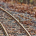 Chipmunk On The Railroad Track by Douglas Barnard
