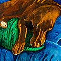 Chocolate Lab On Couch by Roger Wedegis