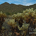 Cholla On The Mountainside by Heather Kirk