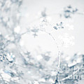 Christmas Abstract by HD Connelly