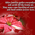 Christmas Card - Red And White Poinsettia by Mother Nature