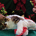 Christmas Joy W Kitty Cat - Kitten W Large Eyes Daydreaming About Xmas Gifts - Framed W Poinsettias by Chantal PhotoPix