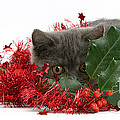 Christmas Kitten by Mark Taylor