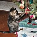 Christmas Kitten Playtime by Kim Galluzzo Wozniak