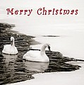 Christmas Swans 2367 by Michael Peychich