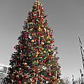 Christmas Tree At Pier 39 by Douglas Barnard
