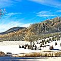 Christmas Tree Farm by Susan Leggett