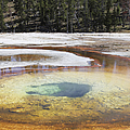 Chromatic Pool Hot Spring, Upper Geyser by Richard Roscoe