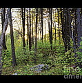 Cinematic Style Back Woods At Sunset by Christine Tuck
