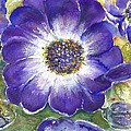 Cineraria Of South Africa  by Bernadette Krupa