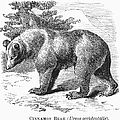 Cinnamon Bear by Granger