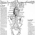 Circulatory System, 16th Century by