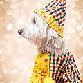 Circus Clown Dog by Edward Fielding