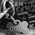 Cisco's by Susan Herber