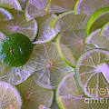Citrons Verts - Green Lemon - Ile De La Reunion by Francoise Leandre