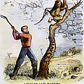 Civil War Cartoon, 1862 by Granger