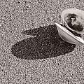 Clamshell by Nancy De Flon