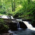 Clare Glens, Co Limerick, Ireland Irish by The Irish Image Collection