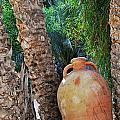 Clay Jar By Palm Tree by Sami Sarkis