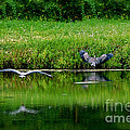 Cleared For Landing by Sue Stefanowicz