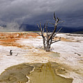 Clearing Storm At Mammoth Hot Springs by Photo by Mark Willocks