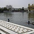 Clearing The Sarovar Inside The Golden Temple Resorvoir by Ashish Agarwal