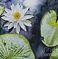 Clearwater Lilly by Kelly Morrow