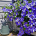 Clematis And Watering Can by Susan Leggett