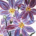 Clematis by Donna Walsh