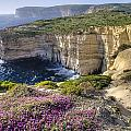 Cliffs Along Ocean With Wildflowers by Philippe Widling