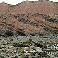 Cliffs At Joggins Nova Scotia by Ted Kinsman