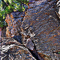 Climbing Rocks And Trees by Phil Perkins