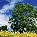 Clonmel, County Tipperary, Ireland by Richard Cummins