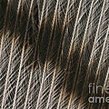 Close-up Of A Turkey Feather by Ted Kinsman