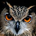 Close Up Of An African Eagle Owl by Joel Sartore