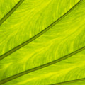 Close-up Of Surface Of A Green Leaf by Daisuke Morita
