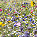 Close Up Of Vibrant Wildflowers In Sunny Field by Echo