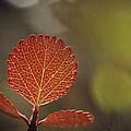Close View Of A Leaf by George F. Mobley
