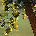 Close View Of A Tree Branch And Leaves by Raymond Gehman
