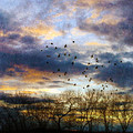 Cloudy Sunset With Bare Trees And Birds Flying by Jill Battaglia