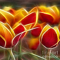 Cluisiana Tulips Triptych Panel 2 by Peter Piatt