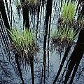 Clumps Of Grass In Water Reflecting by Mattias Klum